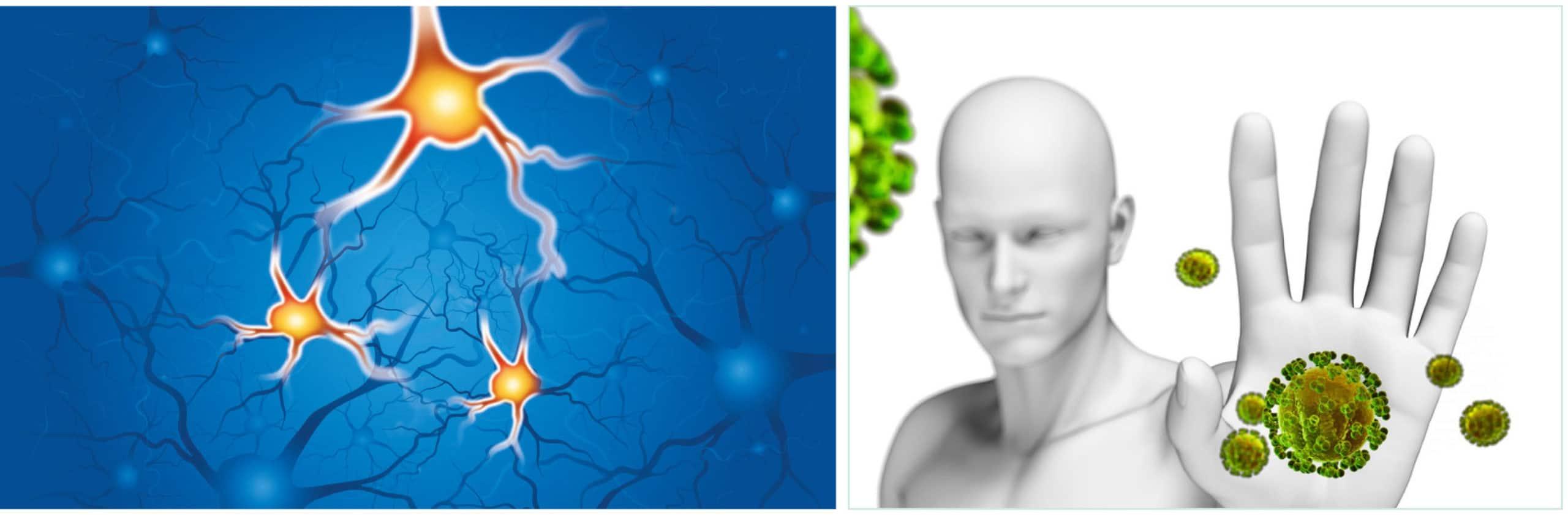NADH Zellen_Virenstop