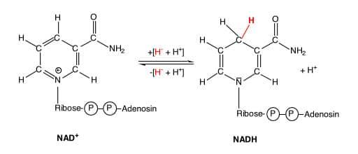 was ist nadh, Was ist NADH / Wirkung / Produkte